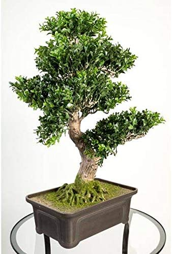 Artplants De Bosso Bonsai Artificiale In Ciotola 550 Foglie 65cm Pianta Finta Bonsai In Vaso Amazon It Casa E Cucina