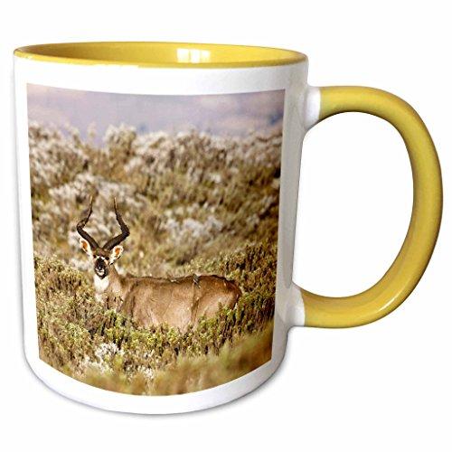 3dRose Danita Delimont - Antelopes - Mountain Nyala antel...