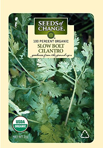 Seeds of Change Certified Organic Santo Cilantro Slow Bolt, 200 Seed Count (Cilantro Seeds Organic)