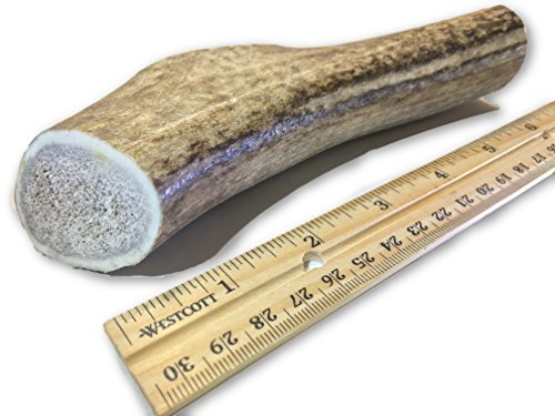 - Premium Elk Antlers for Dogs | Antler Dog Chew Elk Bone For Medium Sized Dogs | Healthy & Long Lasting Treat For Aggressive Chewers | Wild Sourced in the USA - Veteran Owned (Whole, Medium 5