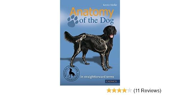 Anatomy Of The Dog In Straightforward Terms Kerstin Mielke