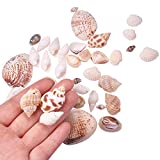 PandaHall Elite Lot of 300g Mixed Style Cowrie Cowry Seashells Oval Spiral Shells with Holes for Craft DIY