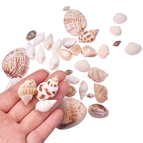 PH PandaHall Lot of 300g Mixed Style Cowrie Cowry Seashells Oval Spiral Shells with Holes for Craft DIY
