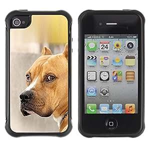 ZETECH CASES / Apple Iphone 4 / 4S / PIT-BULL DOG BROWN GOLDEN PET / pit-bull perro marrón de oro animal doméstico / Robusto Caso Carcaso Billetera Shell Armor Funda Case Cover Slim Ar