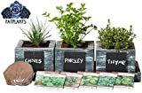 FATPLANTS Cedar Planter Box - Complete Herb Garden Indoor Kit - Herb Growing Kit - Grow Cooking Herbs Basil, Chives, Thyme, Oregano, Parsley & Cilantro (Coastal Turquoise)