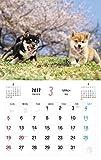 Shiba Inu calendar 2017