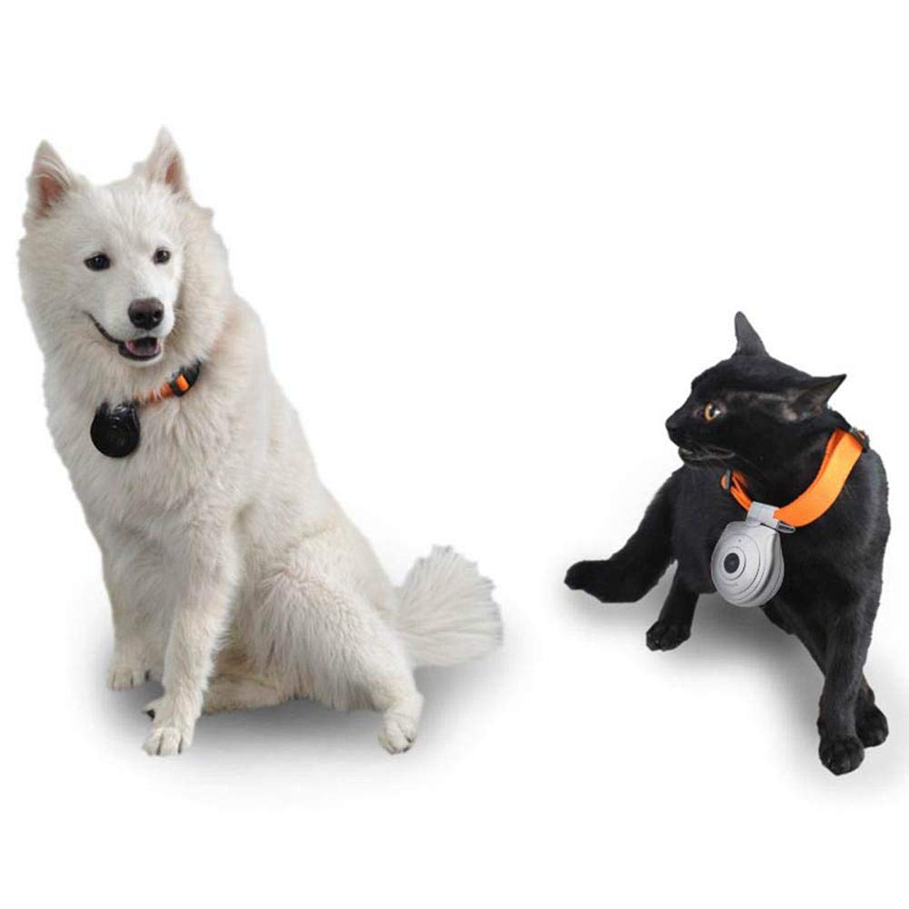 KOBWA - Cámara de Collar para Perro, USB Digital, cámara para Mascotas, grabadora de vídeo DVR para Perro, Gato, Cachorro, tamaño Compacto y Ligero, ...