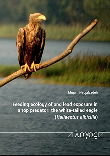 Feeding ecology of and lead exposure in a top predator: the white-tailed eagle (Haliaeetus albicilla)