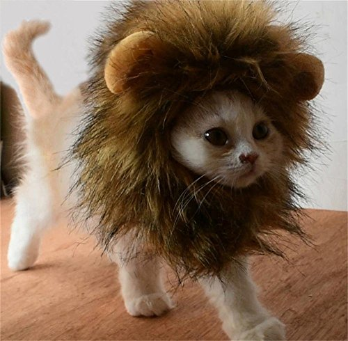 Pet Cat Small Dog Lion Mane Wig Costume Hat for Dog Cat Festival Party Fancy Dress up with (Furry Fury Cat Toy)