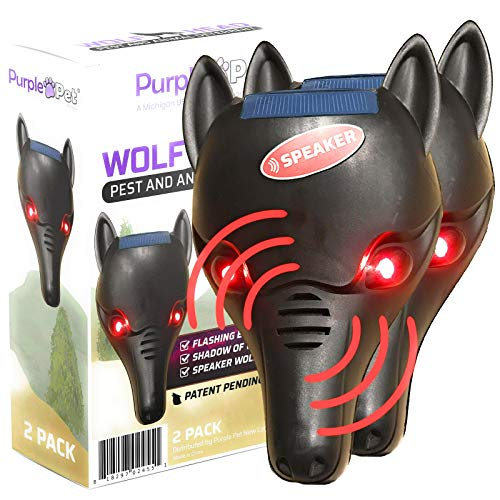 iPrimio Wolf Head with Flashing Eyes, On/Off Speaker, Back Light to Create Silhouette - Scares Deer and Repels Raccoons (2 Wolf Pack Lighted & Speaker) (Predator Deluxe Head)
