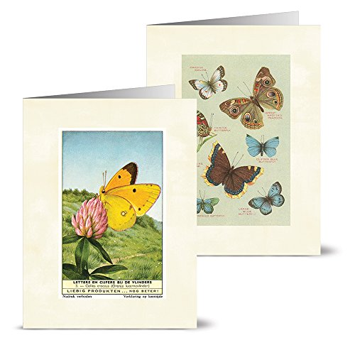 Pansy Note Card - Vintage Butterflies - 36 Note Cards - 12 Designs - Blank Cards - Off-White Ivory Envelopes Included