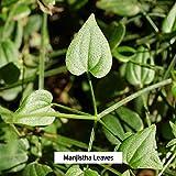 Banyan Botanicals Manjistha Powder, Spice Jar