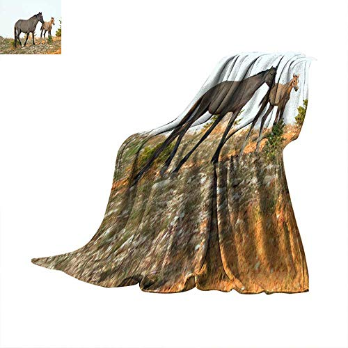 Blanket for Sofa Couch Bed Baby Foal Colt Wild Horse Mustang with his mother in the Pryor Mountains Wild Horse Range on the border of Wyoming and Montana United States Throw Blanket 60