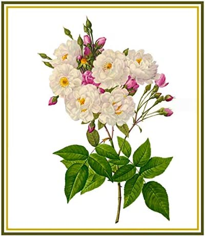 Orenco Originals Spring Bouquet Flower by Pierre-Joseph Redoute Counted Cross Stitch.