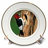 3dRose Red-Headed Woodpecker At Nest Site, Illinois Plate, 8''