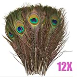 chinkyboo 12pcs Natural Peacock Feathers - About 10-12''Inches Long