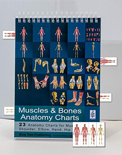 Muscle and Bones Anatomy Flip Book