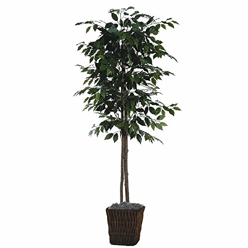 Vickerman TEC0160-0414 Focus Tree in Square Willow Contained Tree, 6'