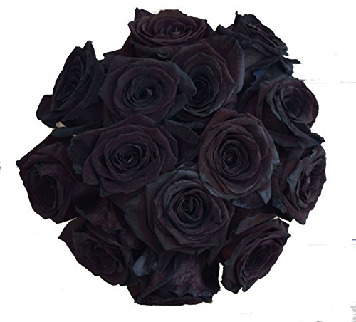 24 Stems - 2 Dozen Farm Fresh Black Tinted Roses Bouquet By JustFreshRoses | Long Stem Fresh Black Rose Delivery | Farm Fresh Flowers by justFreshRoses