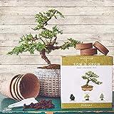 Nature's Blossom Bonsai Tree Kit - Grow 4 Types of