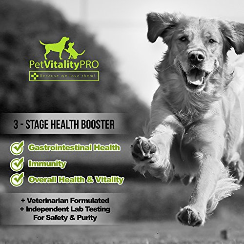 Probiotics for Dogs with the help of healthy Probiotics