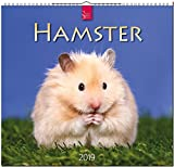 Hamster 2019