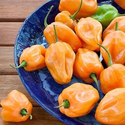 David's Garden Seeds Pepper Hot Habanero SL5959 (Orange) 50 Non-GMO, Heirloom Seeds: Grocery & Gourmet Food