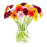 BloomsyBox Flowers for Delivery-Gerbera Daisies Ranbow Hand-tied Bouquet- No Vase, 20 Stems
