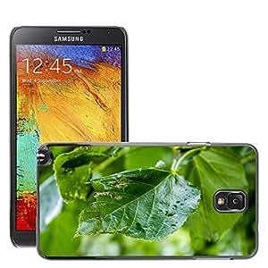 Etui Housse Coque de Protection Cover Rigide pour // M00310013 Árbol de la hoja verde de la planta // Samsung Galaxy Note 3 III N9000 N9002 N9005