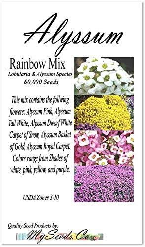 BIG PACK - ALYSSUM RAINBOW MIX Seeds (60,000) - Alyssum Pink, Tall White, Dwarf White Carpet of Snow, Basket of Gold, Royal Carpet - Non-GMO Flower Seeds By MySeeds.Co (BIG PACK Alyssum Mix) ()