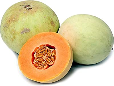 20+ ORGANICALLY GROWN Orange Flesh Honeydew Melon Seeds, Heirloom NON-GMO, Super Sweet and Fragrant, Extra Productive, From USA