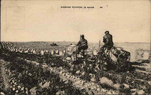 Digging Potatoes in Maine Farming Original Vintage Postcard