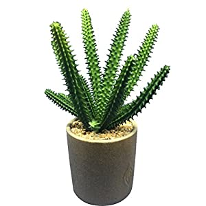 Outgeek Artificial Succulent Plant Fake Plant Lotus Cactus Aloe Decor Artificial Potted Plant Faux Plant 59
