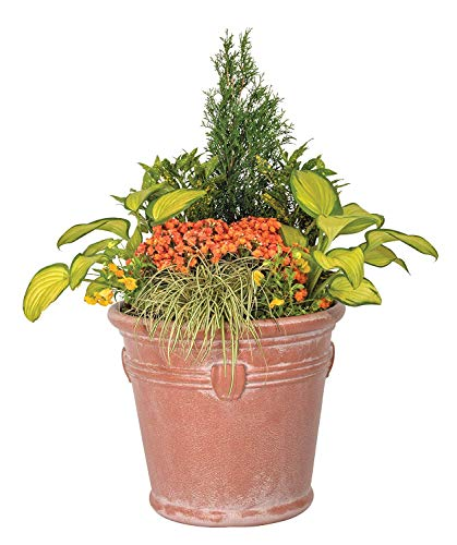 (Suncast 1820TCP4 Resin Weathered Terracotta Planter )