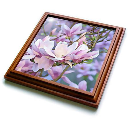 3dRose trv_274712_1 Close up Photo of Magnolia Flower Trivet with Tile, 8 by 8''