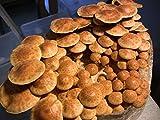 Virgenu 12 Jars Mushroom Growing Kit Ultimate