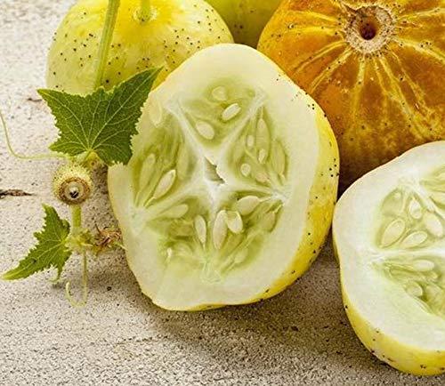 Lemon Cucumber 100 Seeds bin31