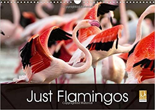 Just Flamingos 2018: Flamingos - Beautiful and Colourful Waders (Calvendo Animals)