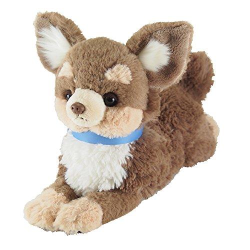 Lap dog. Chihuahua Brown - Brown Chihuahua