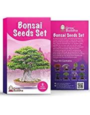 Bonsai Tree Seeds Gift Set van Grow Buddha - Grow Your Own Bonsai Tree Gemakkelijk met onze 8 Bonsai Tree Seeds Set. Beginner tot Expert niveau - Uniek Zaadjes Cadeau-Ideeetje