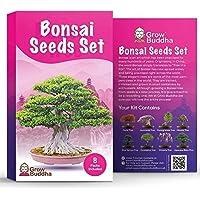 Set de semillas de árbol de bonsái para regalo de - Cultiva tu propio árbol de bonsái fácilmente con nuestro set de 8…