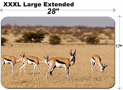 Kalahari Reserve Central Game (MSD Large Table Mat Non-Slip Natural Rubber Desk Pads IMAGE ID: 1575052 Springbok in Central Kalahari Game Reserve Botswana)