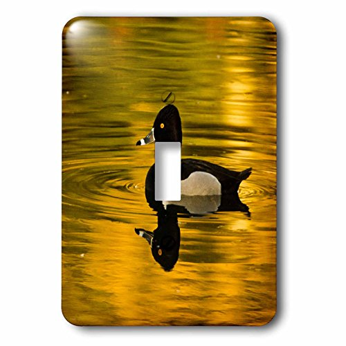 3dRose Danita Delimont - Ducks - Male ring-necked duck, swimming, Dawson Creek Park, Hillsboro, Oregon - Light Switch Covers - single toggle switch - Outlets Hillsboro