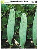Splendour Seeds Snake Gourd Short (20 Seeds)