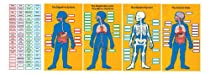 Carson Dellosa Human Body Bulletin Board Set (110178)