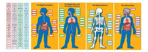 Carson Dellosa Human Body Bulletin Board Set (110178)