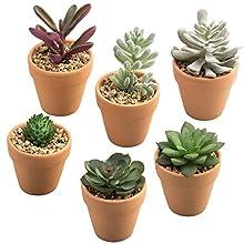 MyGift Mini Artificial Succulent Plants in Terracotta Clay Pots, Set of 6