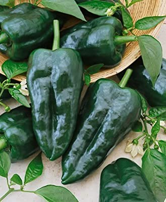 Ancho Grande Hot Pepper Seeds - Capsicum Annuum - 1 Grams - Approx 100 Gardening Seeds - Vegetable Garden Seed