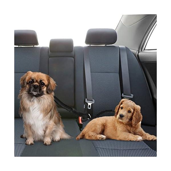 51U9fOqN5EL SlowTon Doppelt Hund Sicherheitsgurt, Doppelhaustier-Sicherheitsgurt Verstellbarer mit elastischem Bungee und…