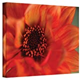 Art Wall Fiery Dahlia by Kathy Yates Gallery Wrapped Canvas, 16 by 24-Inch